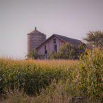 映画「トム・アット・ザ・ファーム」あらすじ感想 暴力と農場の閉塞感